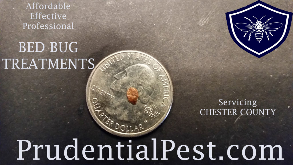 Bed Bug Control Chester County