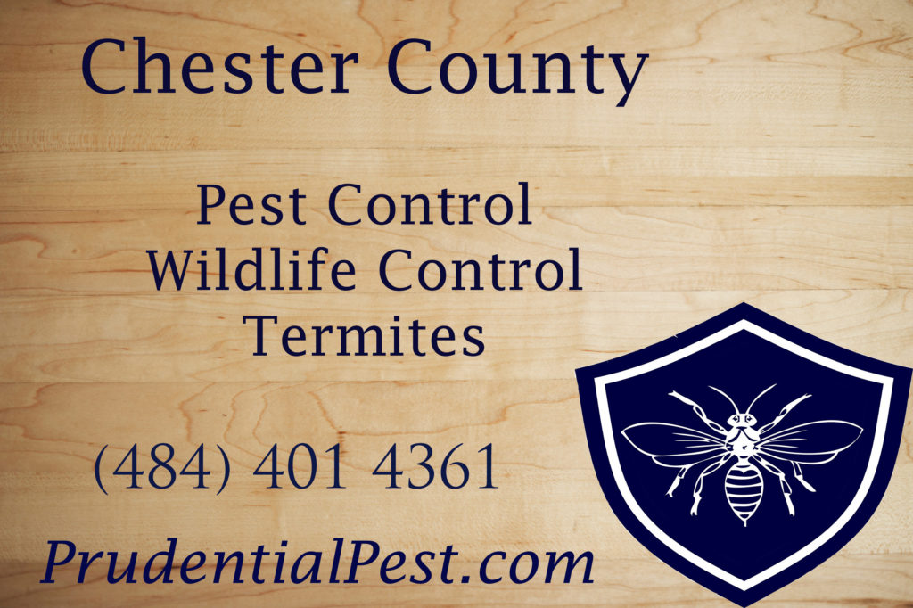 Chester County Pest Control