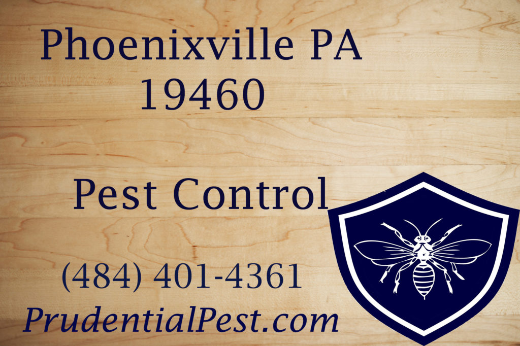 Phoenixville PA Pest Control