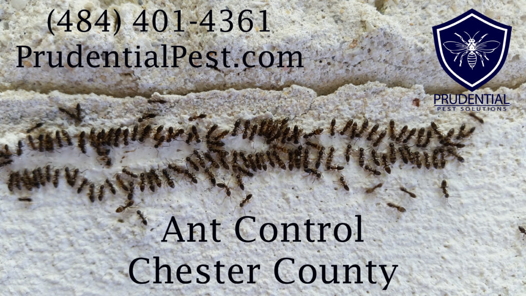 Ant Control Chester County