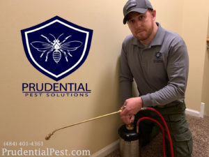 Pest Control Chester County