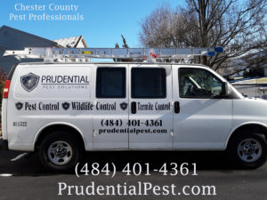 Pest Control West Chester