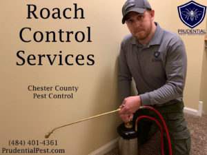 Roach Control Chester County