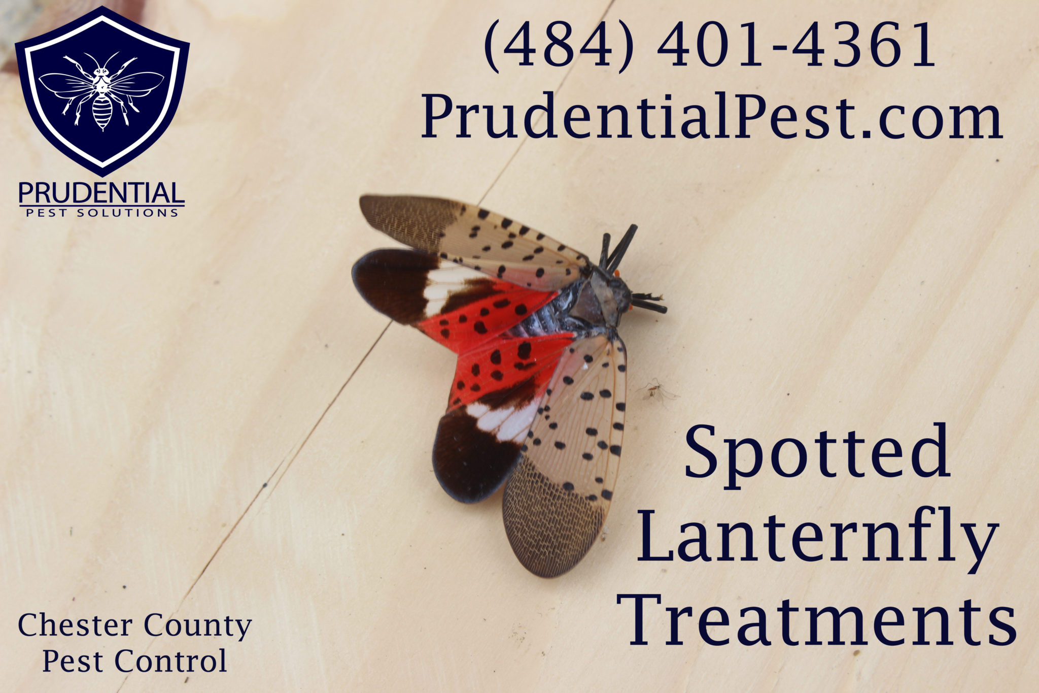 Spotted Lanternfly Treatments