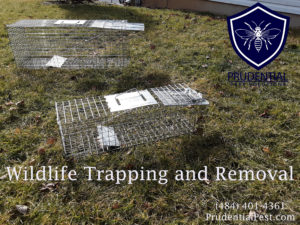 Wildlife Trapping