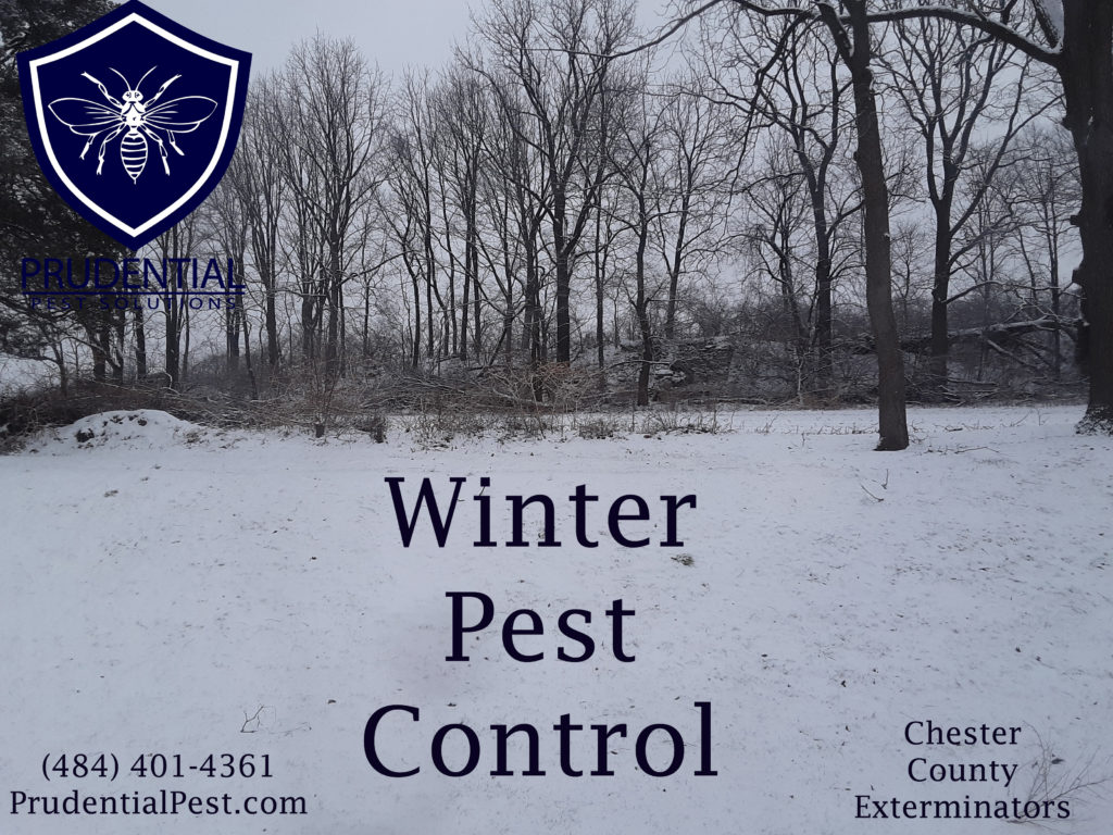 Winter Wildlife Control
