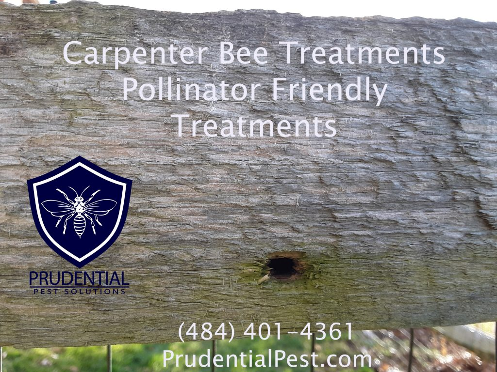 Carpenter Bee Treatments and Prevention