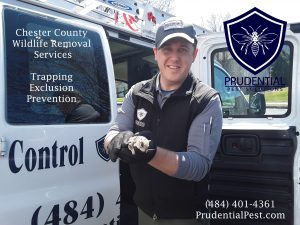Wildlife Control Services Chester County PA