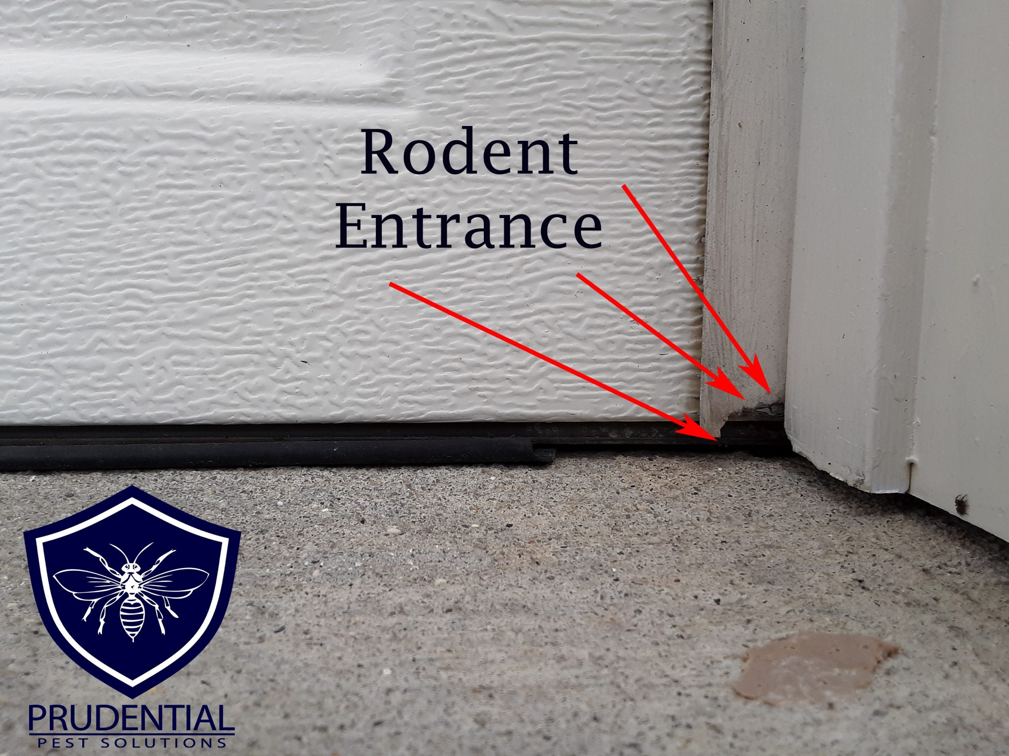Rodent Proofing Garage