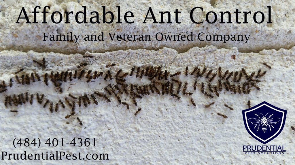 Affordable Ant Control West Chester