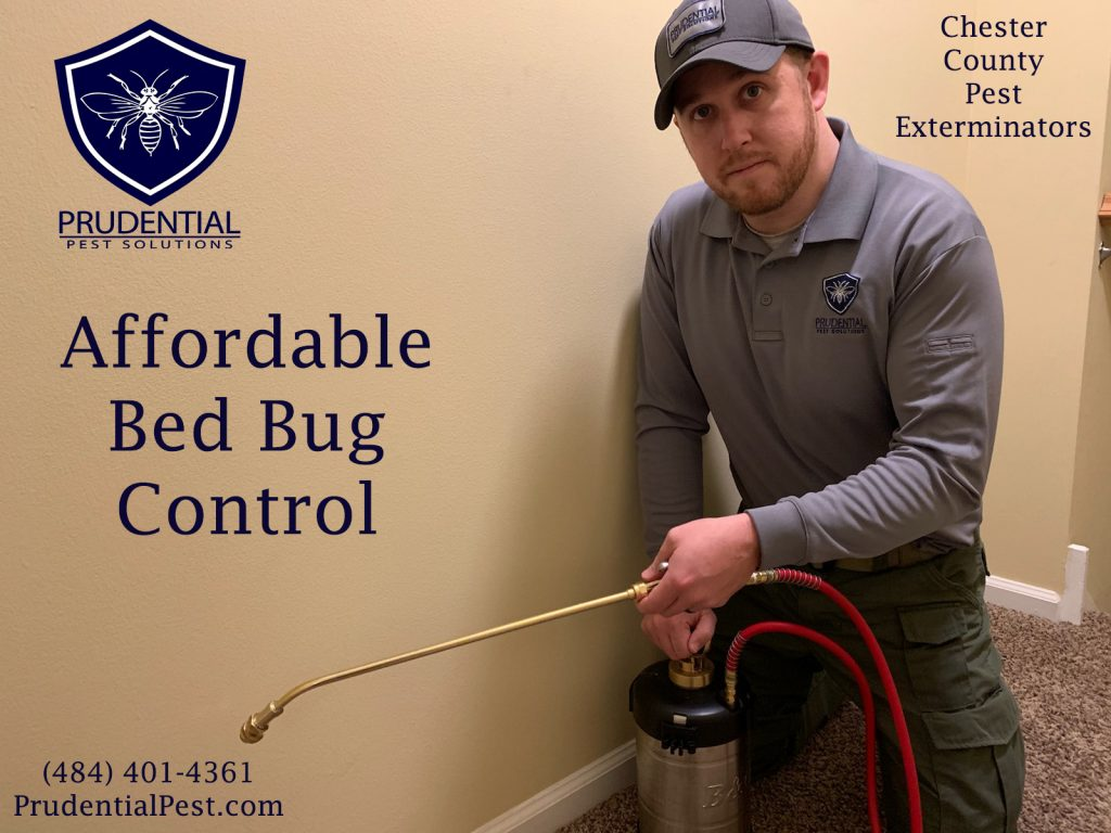 affordable bed bug control