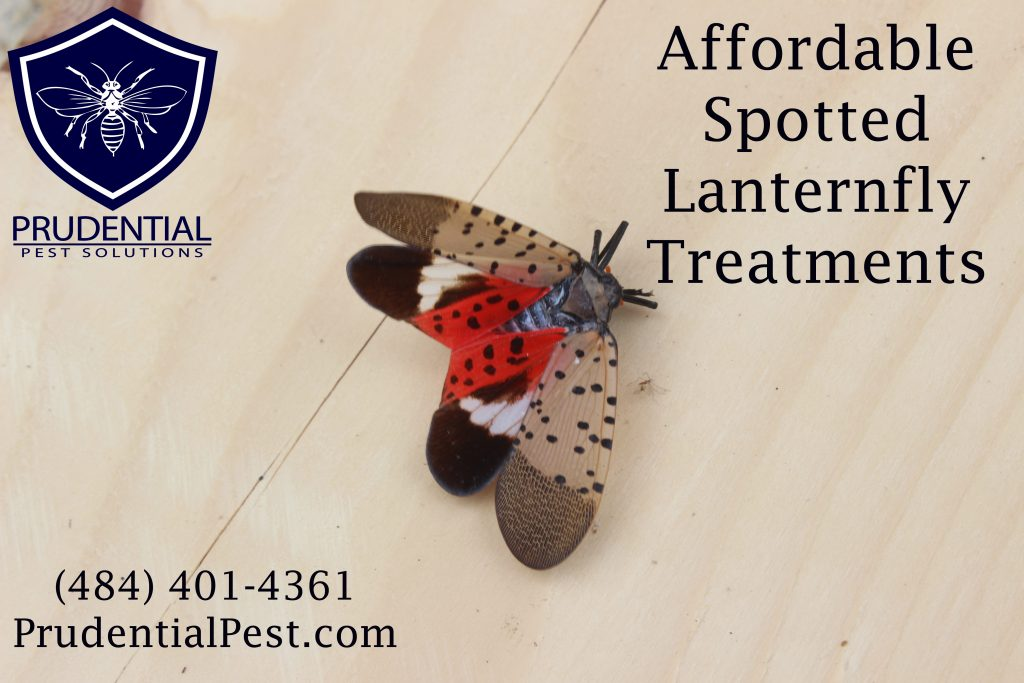 affordable spotted lanternfly treatments