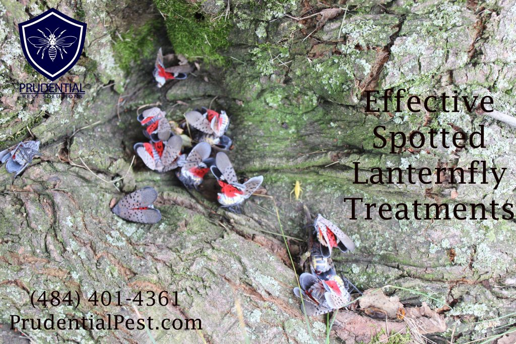effective spotted lanternfly treatments