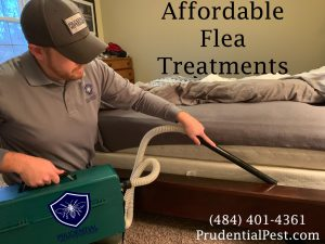 affordable flea treatments for your home.