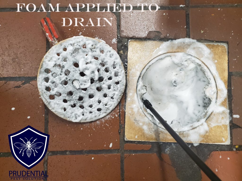 Drain Cleaning and Foaming