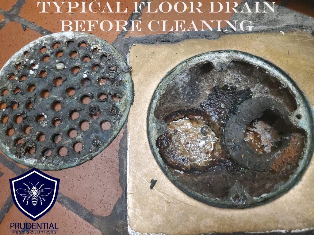 Floor Drain Service