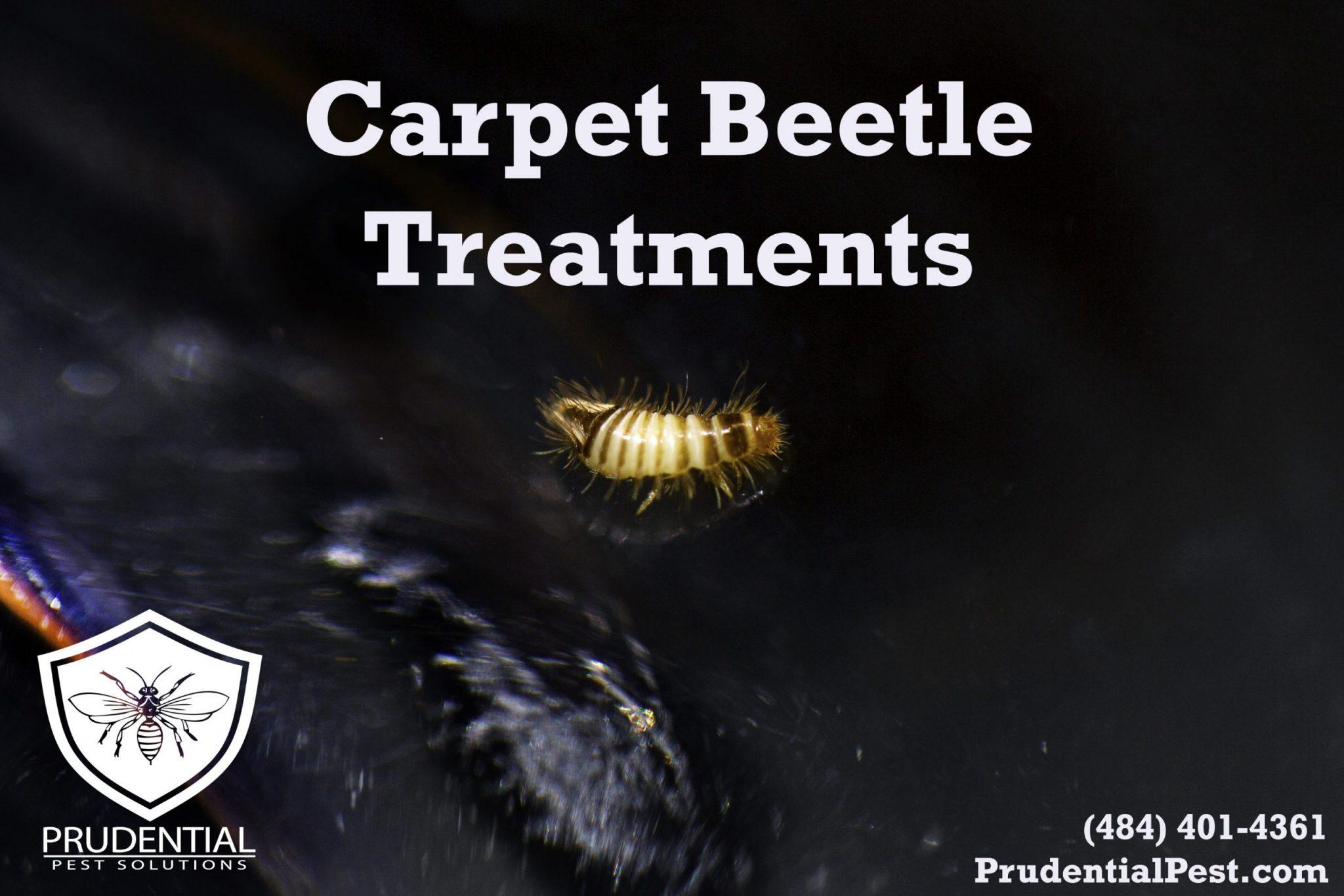 carpet beetle treatments