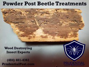 Powder Post Beetle Treatments