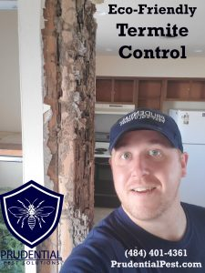 Eco Friendly Termite Control and Treatments