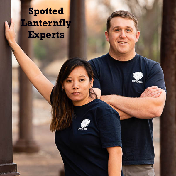 spotted lanternfly experts