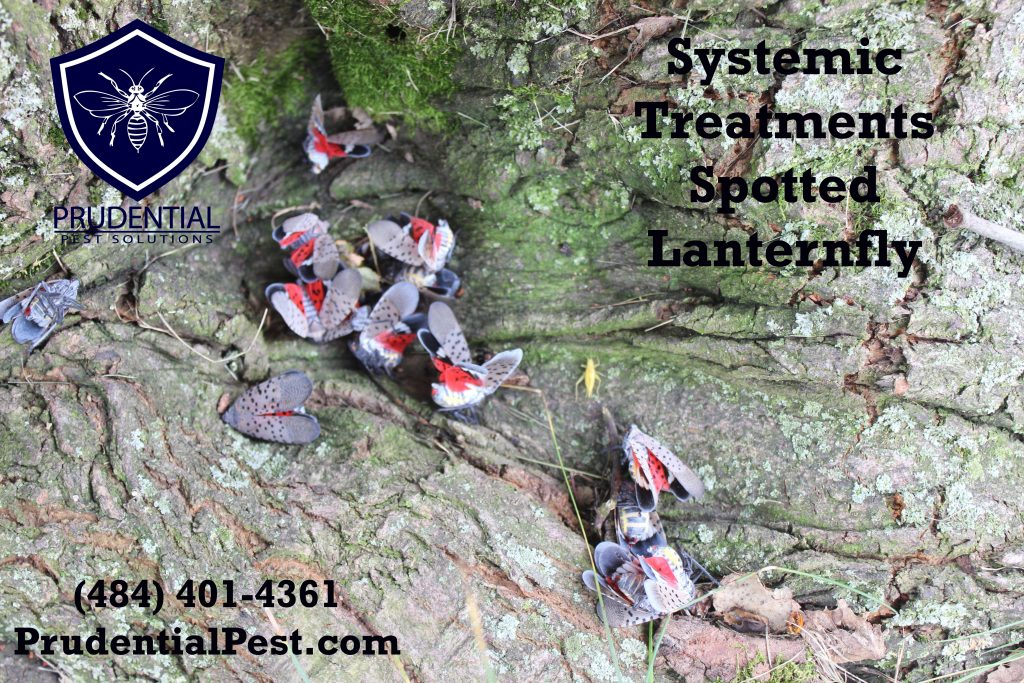 systemic treatments for spotted lanternfly