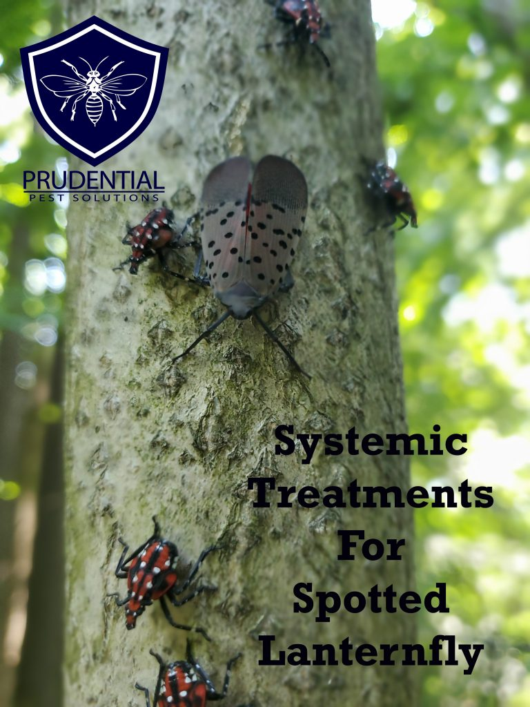 systemic treatments spotted lanternfly