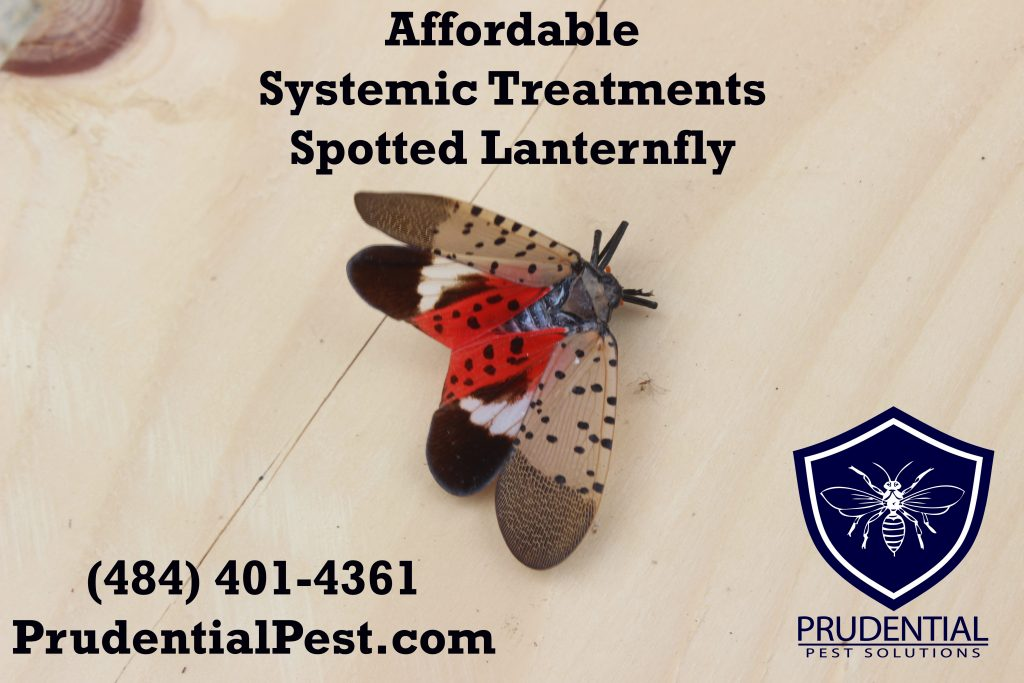 affordable systemic treatments lanternfly