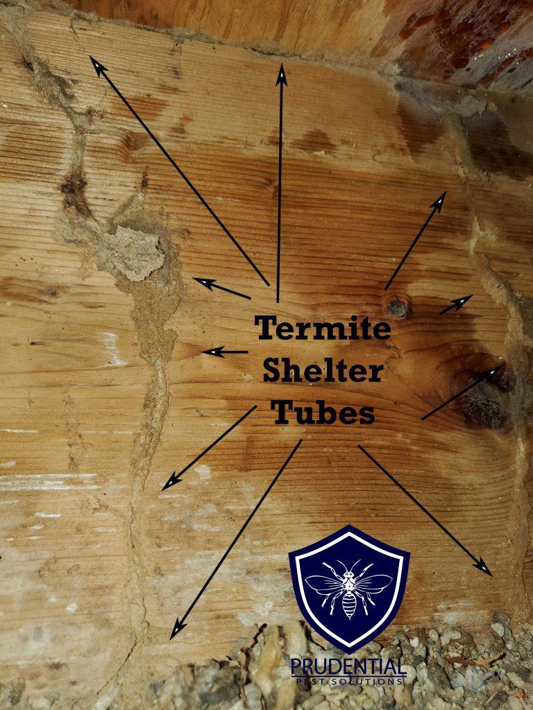 Termite Mud Shelter Tubes