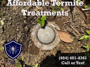 Affordable Termite Treatments