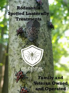 robesonia spotted lanternfly treatments