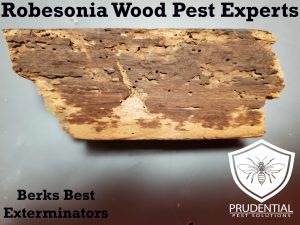 robesonia wood pest experts