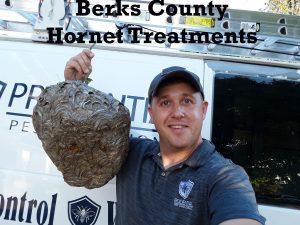Berks County Hornet Treatments