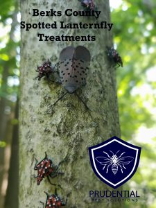 Berks County Spotted Lanternfly Treatments