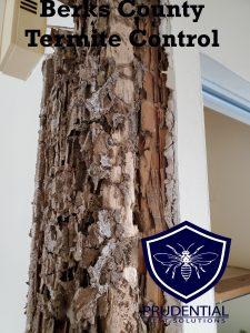 Berks County Termite Treatmetns