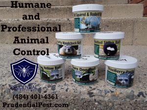 humane and professional animal control