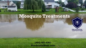 mosquito treatments