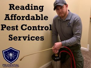 reading affordable pest control services