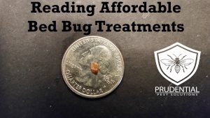 reading affordable bed bug treatments