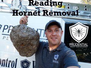 reading hornet removal