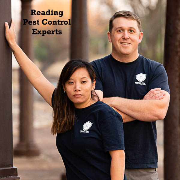 reading pest control experts