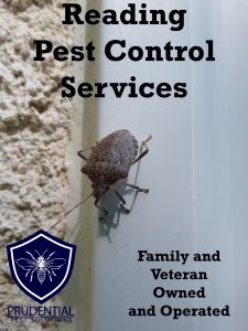 reading pest control services