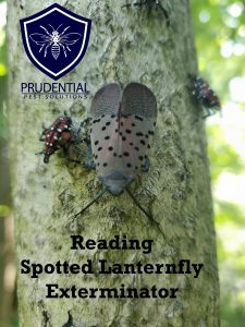 reading spotted lanternfly exterminator
