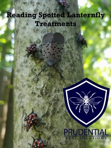 reading spotted lanternfly treatments