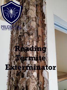 reading termite exterminator
