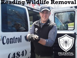 reading wildlife removal