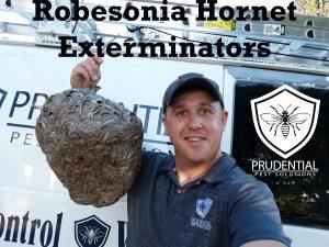 robesonia hornet exterminator