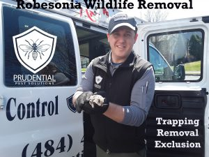 robesonia wildlife removal