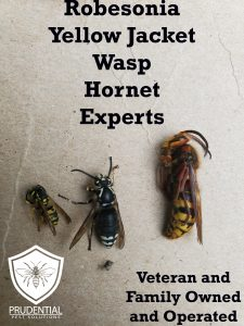 robesonia yellow jacket wasp hornet expert