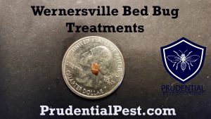 wernersville bed bug treatments