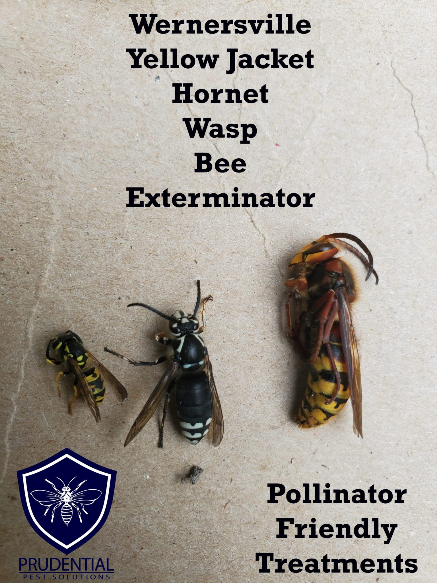 wernersville bee hornet yellow jacket exterminator